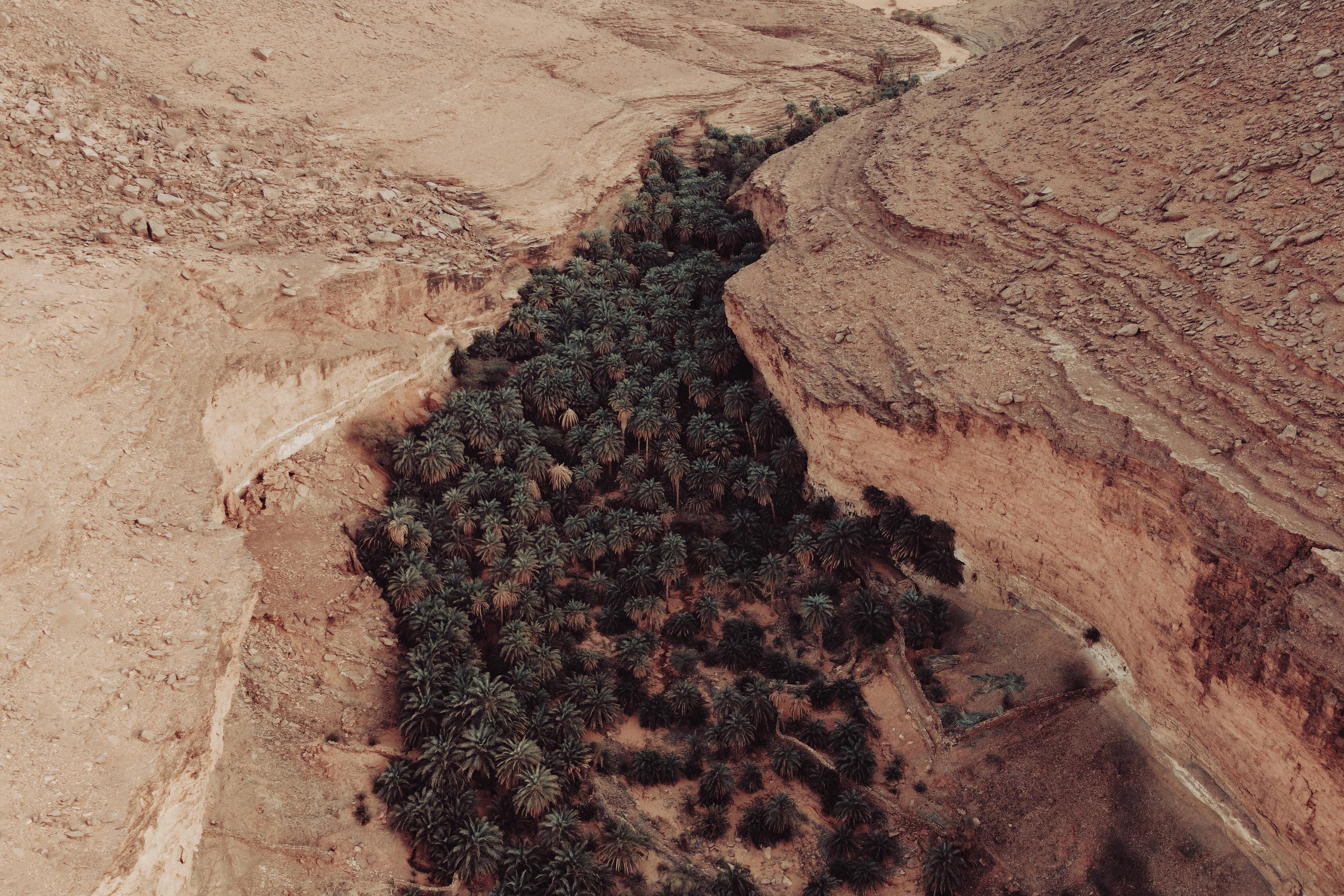 Terjit Oasis Mauritania
